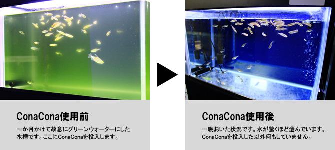 ConaConaが徐々にろ過槽に入ってゆき、半日から1日程度で本領を発揮(バクテリアが活性化)します。