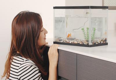 金魚の飼い方《金魚の観察》生き物ですからストレスや環境の変化、金魚同士のけんかなどで、病気になったりけがをすることもあります。よく見てあげることで、早めにちょっとした変化に気づいてあげることができます。環境が変わった最初の導入時は特によく観察してあげる必要があります。